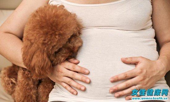 狗狗打过疫苗会有弓形虫吗 孕妇该怎样预防弓形虫